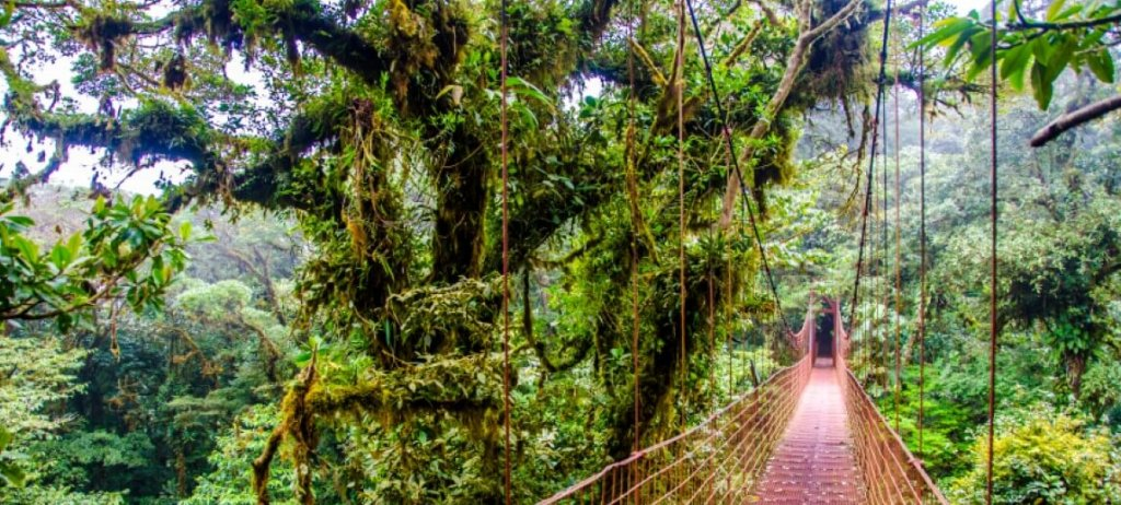 Bridge in Rainforest – Costa Rica – Monteverde