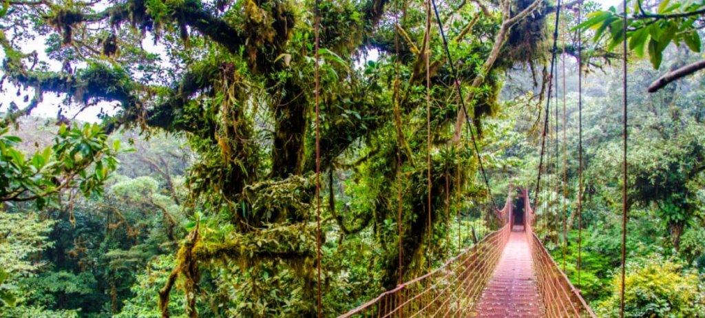 Bridge in Rainforest – Costa Rica – Monteverde